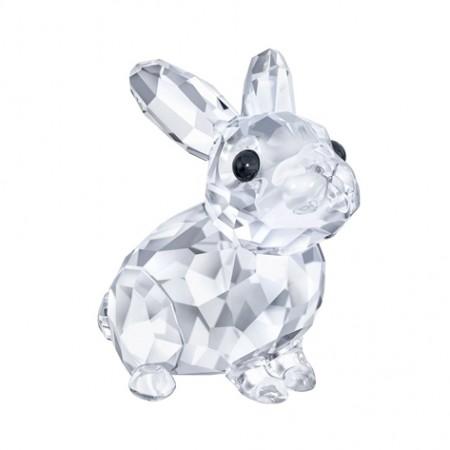 5135942-baby-rabbit