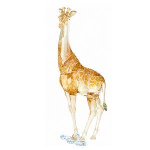 SCS 2018 Annual edition - giraffe Mudiwa - 5301550